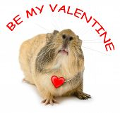 Valentine Cavy