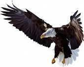 image of spread wings  - vector illustration flying eagle - JPG