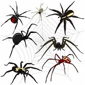 stock photo of sting  - Vector of spiders set on white background - JPG