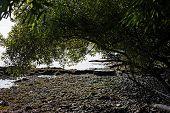Stony Beach With Trees