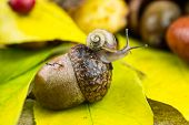 Herbstdekoration with a snail
