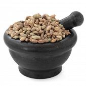 Cocklebur xanthium fruit chinese herbal medicine in a black stone mortar with pestle over white back