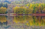 Trees ablaze with Autumn colour reflected in the calm surface of Coniston Water in the Lake District