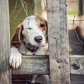 stock photo of forlorn  - Neglected dog behind fence  - JPG
