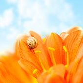 Little snail crawling on crocus flower over blue sky background, floral border, small escargot on petals of gerbera, spring season, insect in the shell