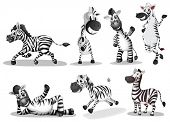 Illustration of the playful zebras on a white background