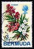Postage Stamp Bermuda 1970 Nerium Oleander, Plant