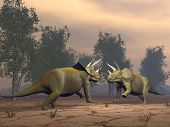 Triceratops dinosaurs fighting - 3D render