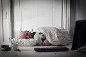 picture of koala  - Exhausted office worker sleeps with his koala bear teddy - JPG