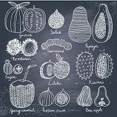 Tropical fruit set in vector. Guava, salak, papaya, rambutan, tamarind, feijoa, litchi, kiwano, youn