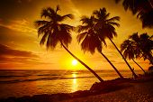 Beautiful sunset over the sea with a view at palms on the white beach on a Caribbean island of Barbados