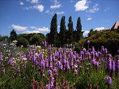 Wroclaw Botanical Gardens