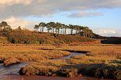 River Otter, Devon