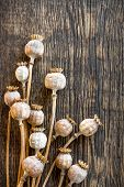 picture of opiate  - Poppy heads on a vintage wooden table - JPG