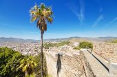 Palm tree and Malaga city in the background view from Gibralfaro Castle. Malaga Spain.