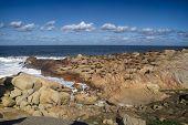 Sea Lions In Cabo Polonio