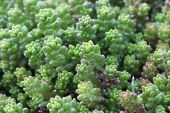 Healthy succulents