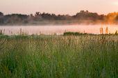 Wild Grass By A Bog