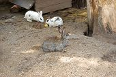 picture of foodchain  - Many different rabbit at zoo pose for watching - JPG