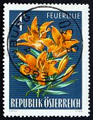 Postage Stamp Austria 1966 Fire Lily, Flowering Plant