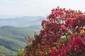 red autumn tree in the mountains