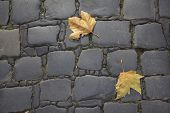 the leaves on the pavement