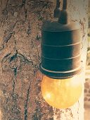 retro bulb at the tree