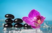 Spa still life with pink orchid and black zen stones in a serenity pool