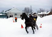 Canadian Horse Pulling Sleigh