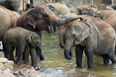 A herd of elephants are seen in the water spray each other
