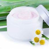 Organic Skincare Creams With Camomile