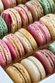 Classic French Macaroons