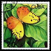 Vintage  Postage Stamp. Butterfly Phoebis Avellaneda.