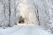 foto of slippery-roads  - Winter road in snowy frosty forest landscape - JPG