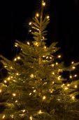 Illuminated Christmas tree outside shot