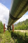 Trans Alaska Oil Pipeline near City of Fairbanks