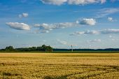Water Tower In Wheat Field