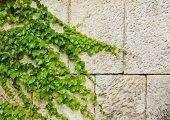 Yvi Climbing Up A Wall