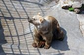 pic of zoo  - Bears in the zoo park - JPG