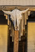 picture of cow skeleton  - Iconic western cow skull hanging from a post - JPG