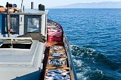 Commercial Fishery