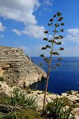 stock photo of grotto  - The Blue Grotto Malta, a number of small caves and caverns  on the beautiful south coast. - JPG