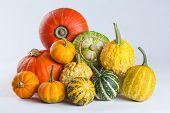 Colorful Pumpkins. Varieties