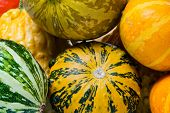 Colorful Pumpkins. Macro view