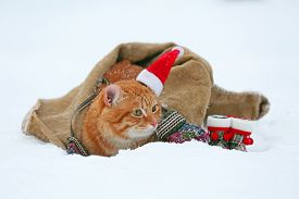 pic of blanket snow  - Cute red cat with Santa hat wrapped in blanket on snow background - JPG
