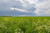 pic of wind-farm  - Wind farm and vegetables on a field in spring - JPG
