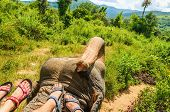 foto of big-foot  - Elephant ride - JPG