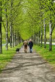 stock photo of dog-walker  - rear view of a young couple taking the dog for a walk - JPG