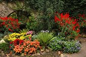 Autumn Flower-Bed