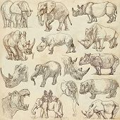 picture of rhino  - HEAVY ANIMALS  - JPG
